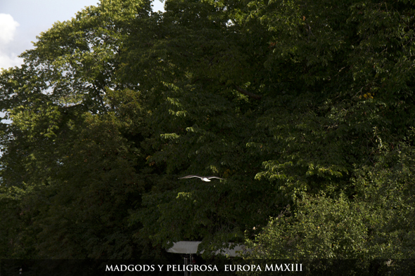 MadGods_Peligrosa_Scandinavia_marked590_053